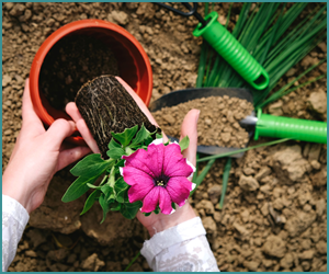 ノウハウを学んで優雅な庭をアレンジしよう!「ガーデニングアドバイザー資格取得通信講座」